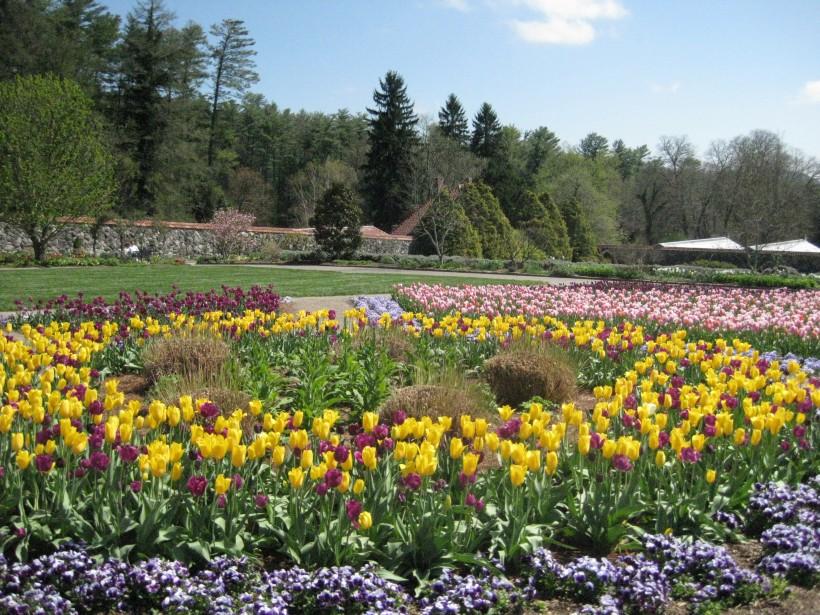 Tulips at Biltmore
