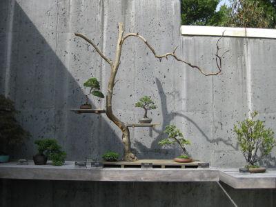 Bonsai Arrangement