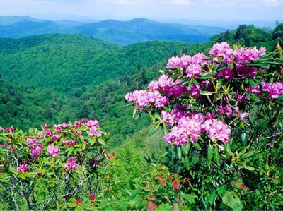 spring_mountains