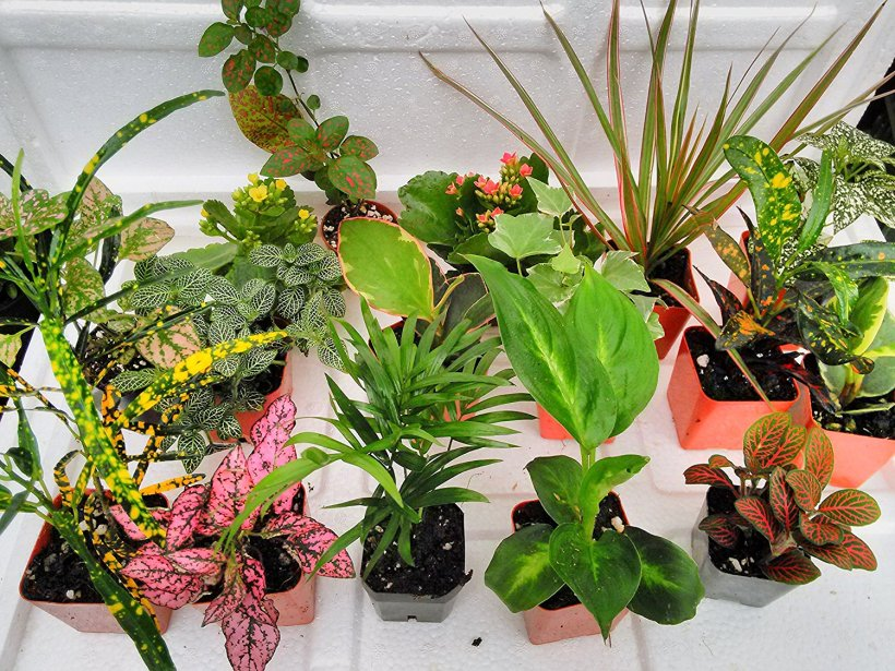 mini-plants_
